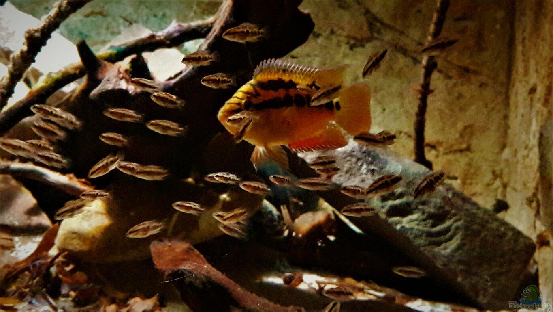 Besatz Im Aquarium Central Park Aus Central Park Von Leo Fan