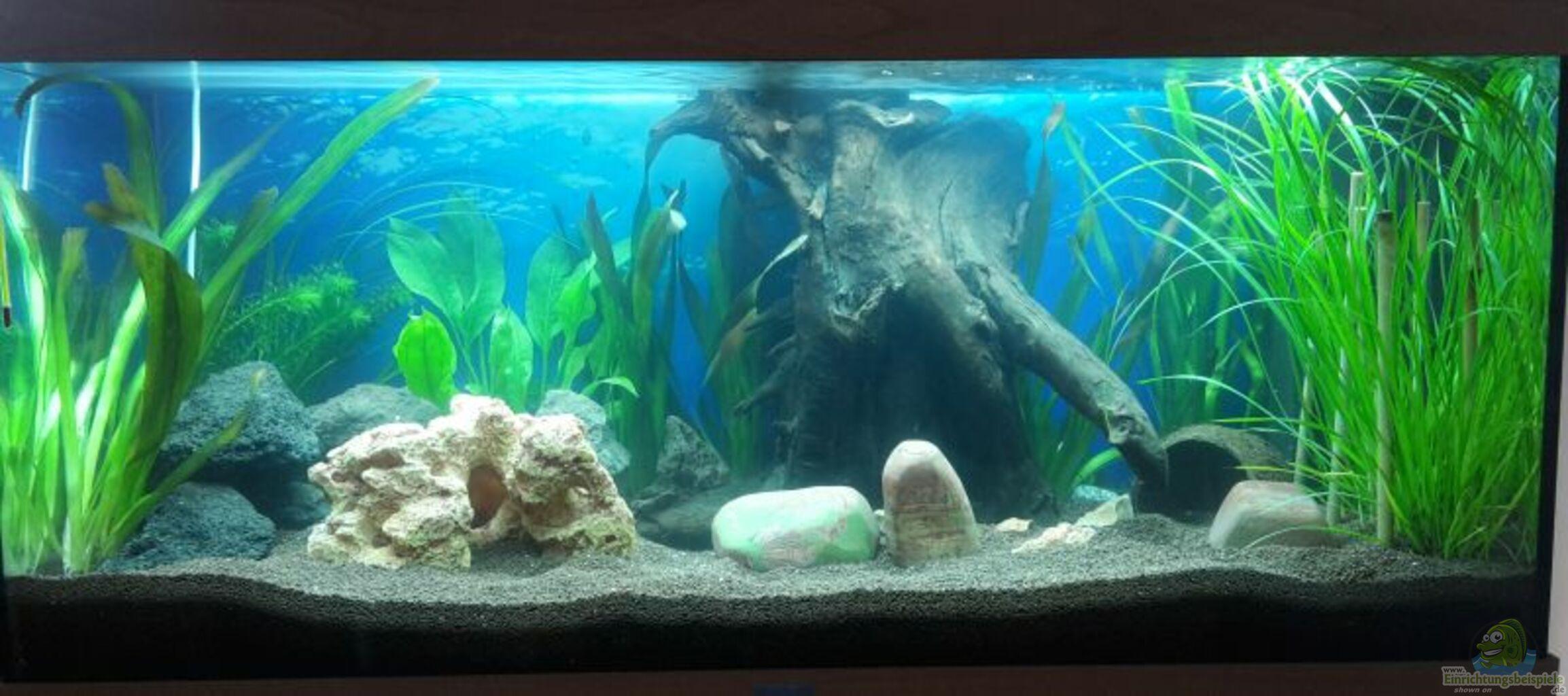 aquarium von returner juwel rio 180. Black Bedroom Furniture Sets. Home Design Ideas