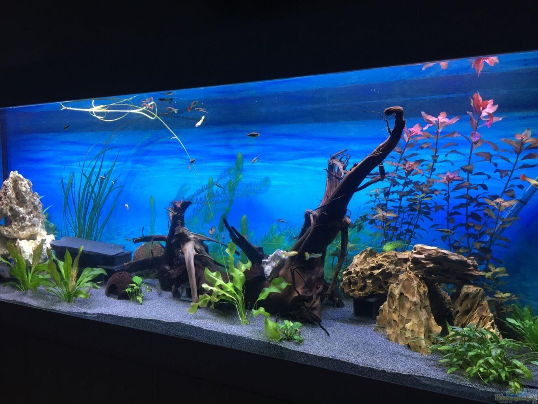 Aquarium von patric uhlmann becken 33307 for Boden aquarium