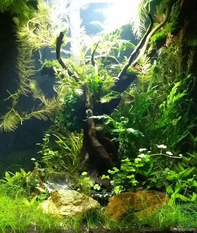 Aquarium von Dario: Magic Aquascaping