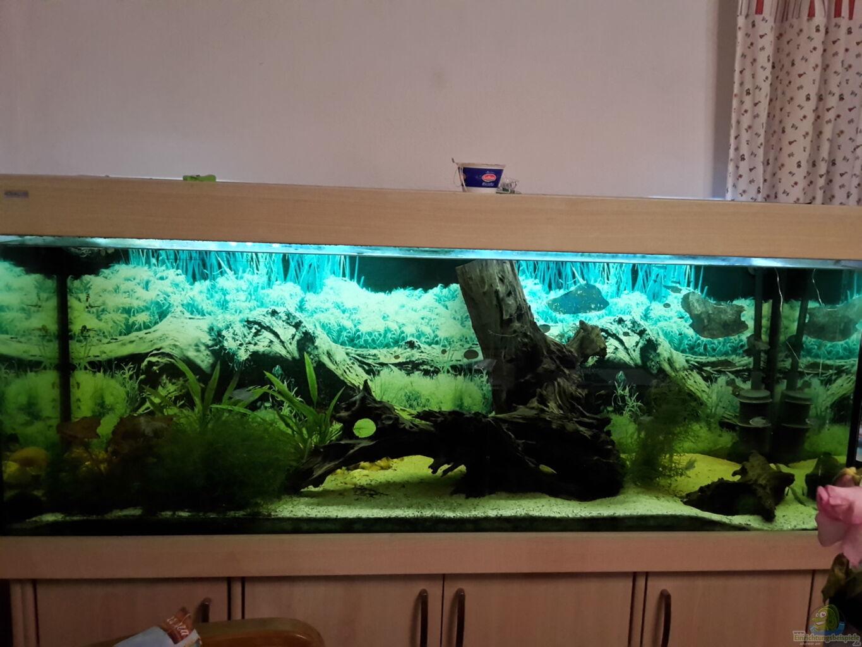 aquarium welsbecken 400liter aus welsbecken 400liter von tanja f. Black Bedroom Furniture Sets. Home Design Ideas