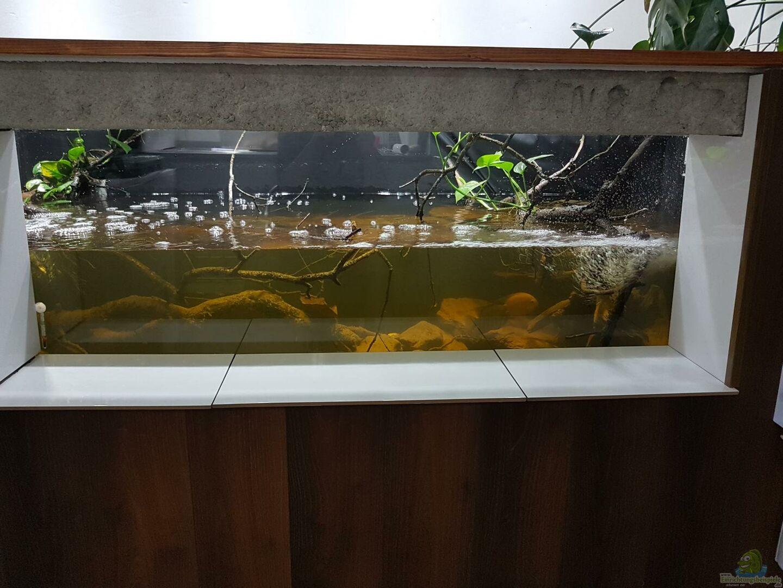 Wasserwechsel 750 liter aus keller aquarium von thomas michel for Aquarium wasserwechsel