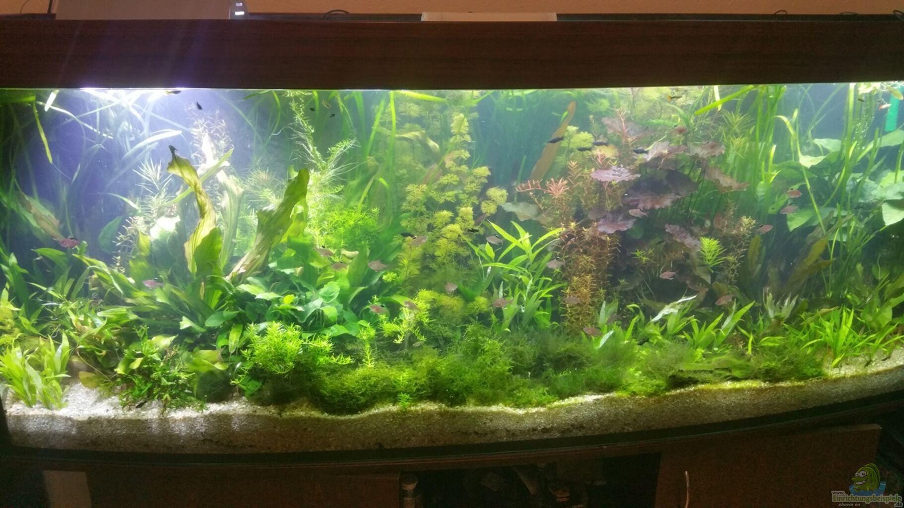 Aquarium von seaofgreen becken 33384 for Aquarium becken
