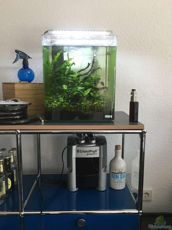 aquarium von ayahuasca i love stones again. Black Bedroom Furniture Sets. Home Design Ideas