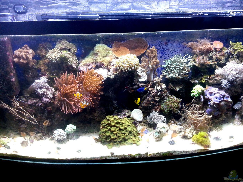 aquarium von frank ulbricht mein kleines riff. Black Bedroom Furniture Sets. Home Design Ideas