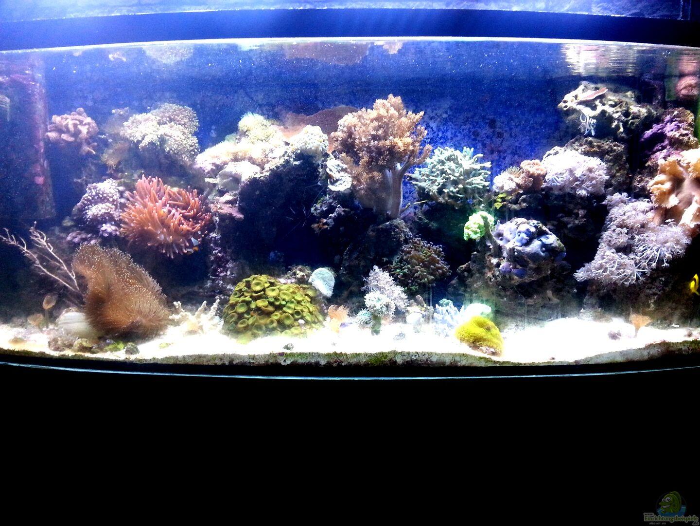 aquarium von frank ulbricht 33426 mein kleines riff. Black Bedroom Furniture Sets. Home Design Ideas