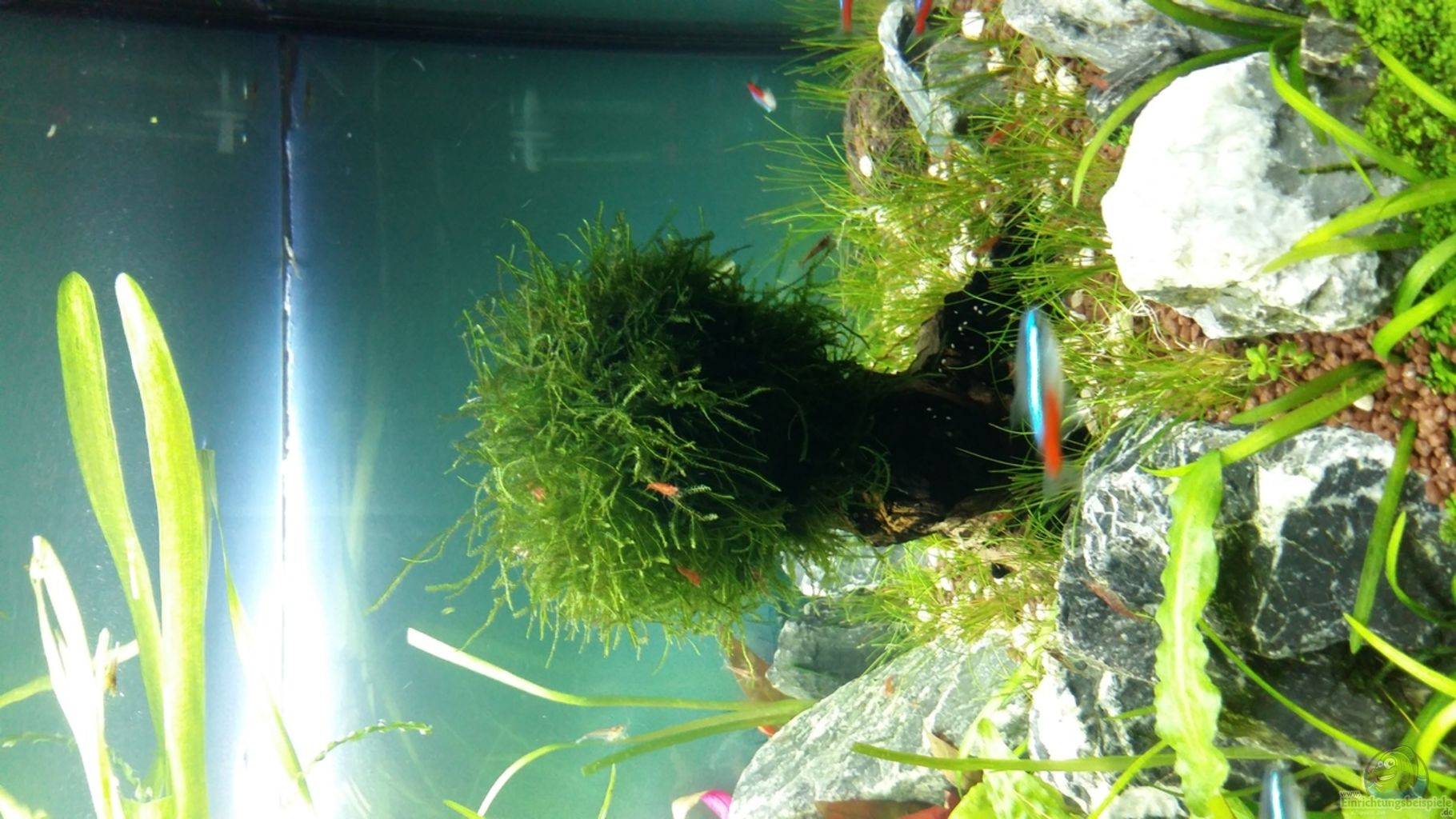aquarium von spawngrow garnelen heimat. Black Bedroom Furniture Sets. Home Design Ideas