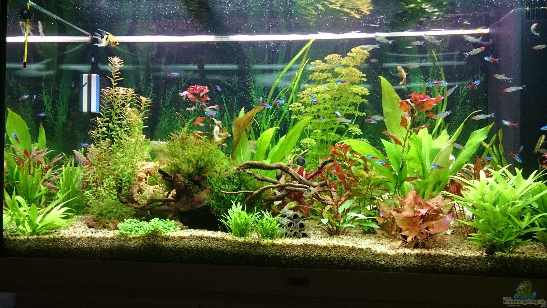 aquarium lampe f r pflanzen pflanzen lampe kaufen bei obi. Black Bedroom Furniture Sets. Home Design Ideas