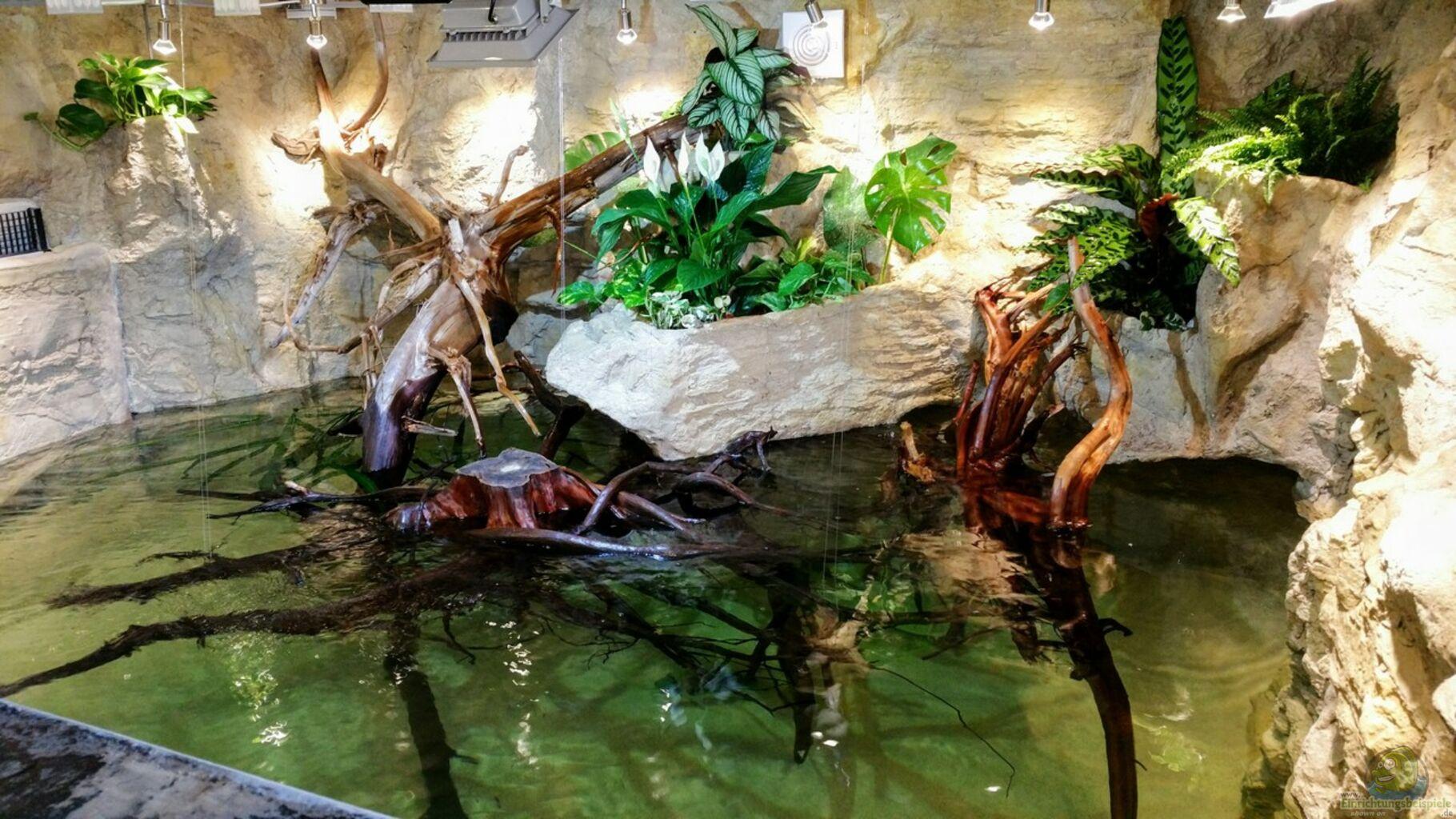 aquarium von hayabusa rochen becken potamotrygon. Black Bedroom Furniture Sets. Home Design Ideas