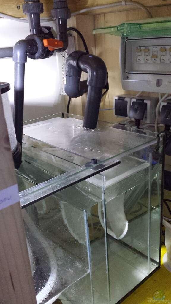 aquarium von wolfgang k meerwasseraquarium. Black Bedroom Furniture Sets. Home Design Ideas