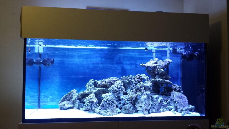 Einrichtungsbeispiele f r aquarien mit produkten von sera for Bilder von gartenteichen