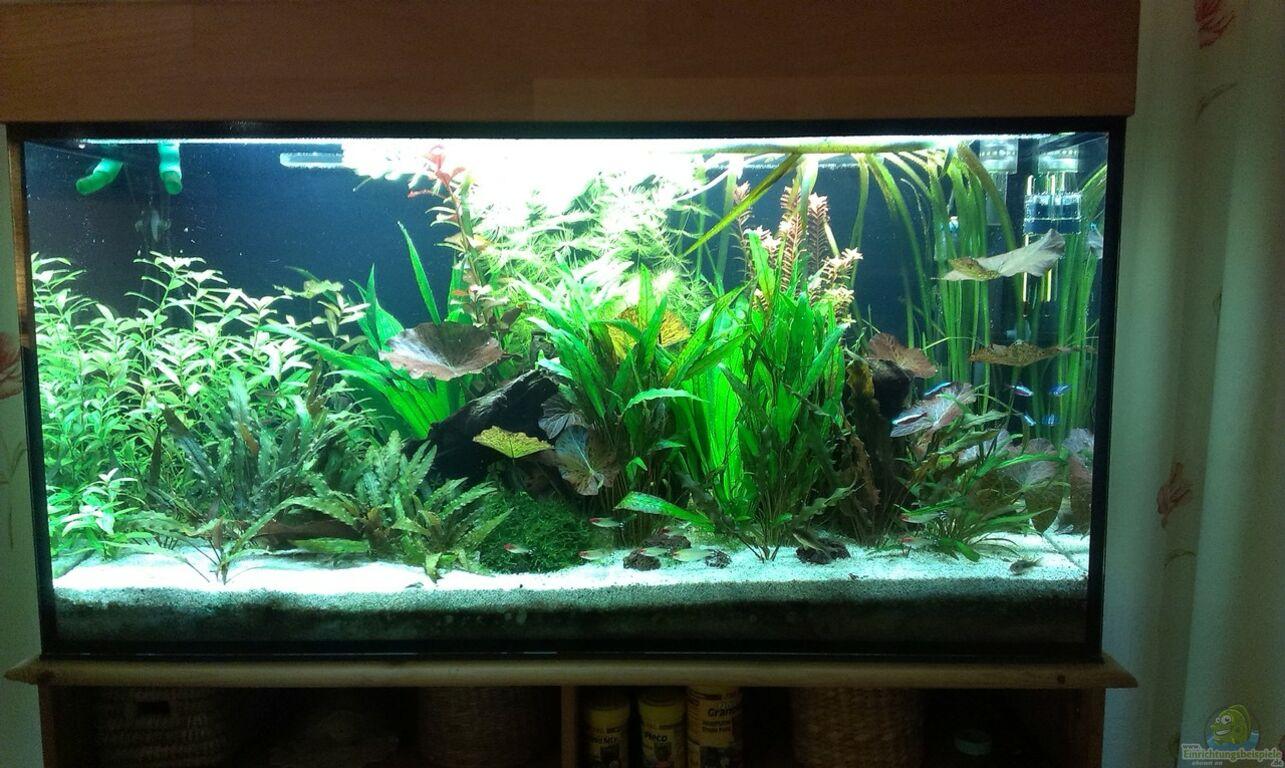 Selbstgebaute aquarium abdeckung alle ideen ber home design for Aquarium abdeckung