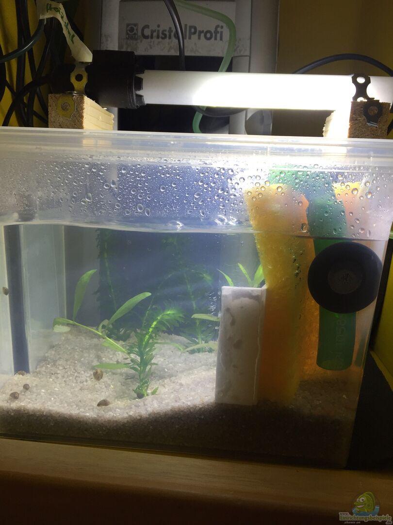 aquarium von yo bo 33588 apistos mit corys. Black Bedroom Furniture Sets. Home Design Ideas