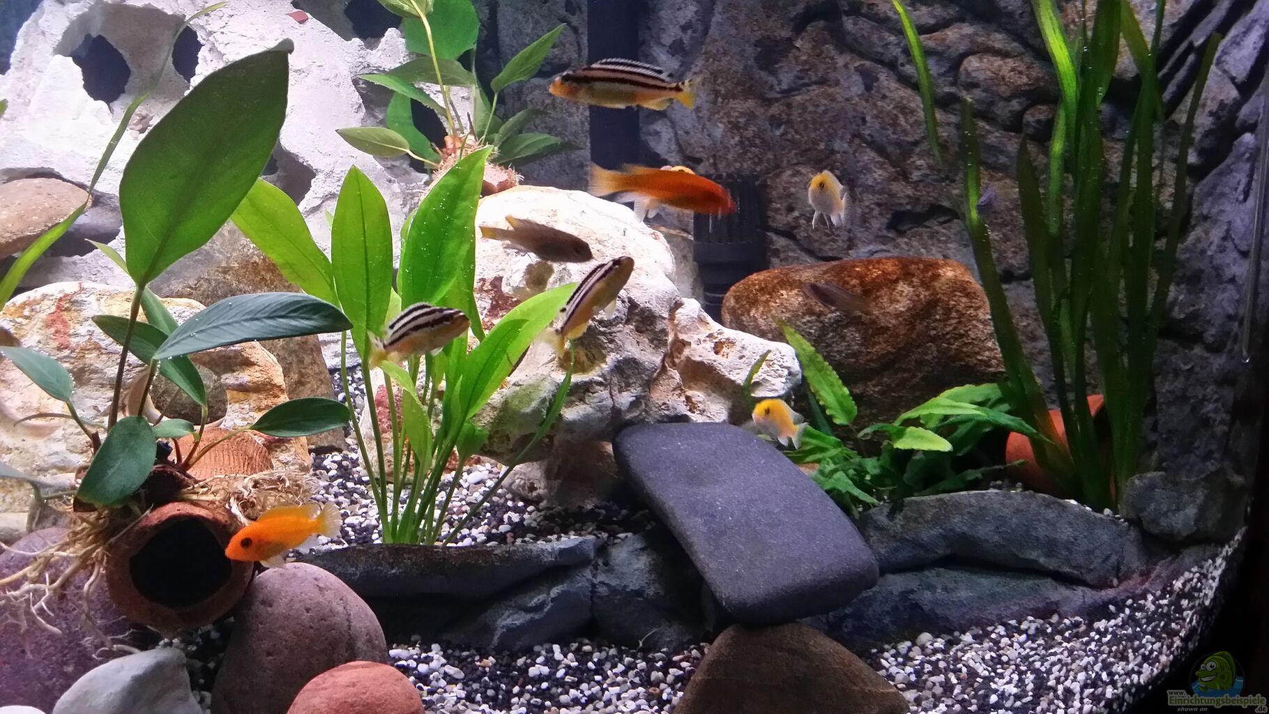 pflanzen im aquarium fluval venezia 350 eckaquarium aus. Black Bedroom Furniture Sets. Home Design Ideas