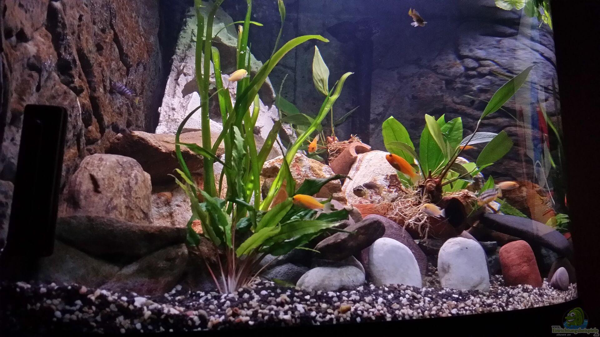 pflanzen im aquarium fluval venezia 350 eckaquarium aus fluval venezia 350 eckaquarium von. Black Bedroom Furniture Sets. Home Design Ideas