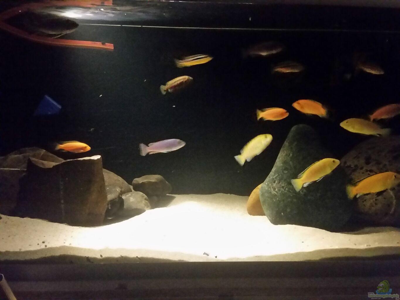Aquarium von dave weber becken 33614 for Aquarium becken