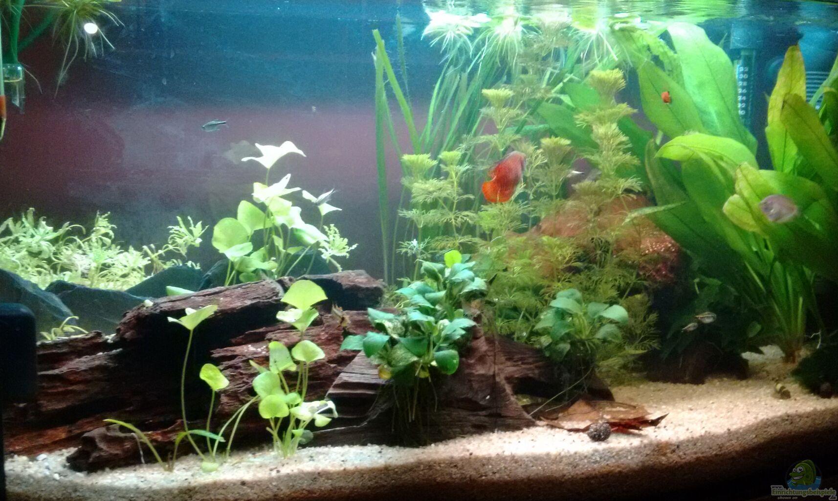 aquarium gesellschaftsbecken aus gesellschaftsbecken von stephy. Black Bedroom Furniture Sets. Home Design Ideas