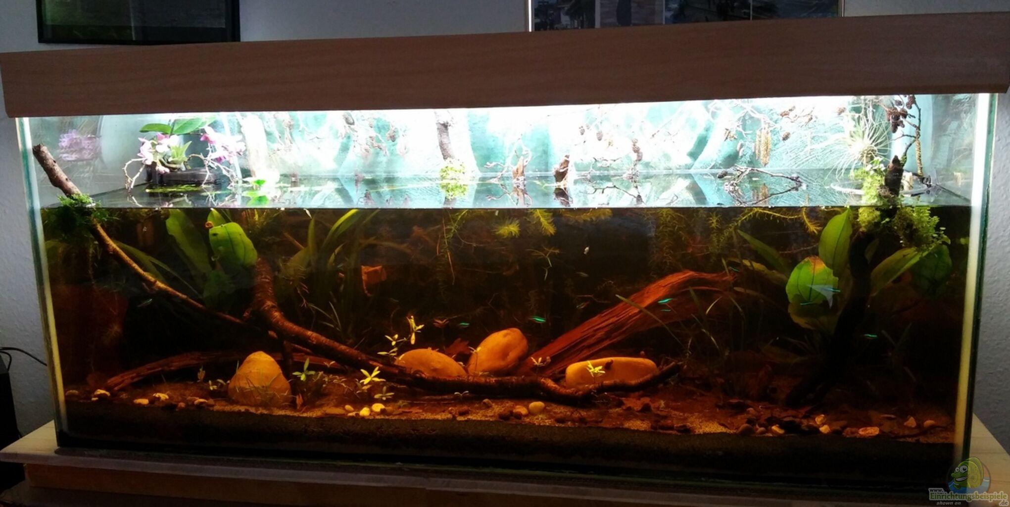 Aquarium von wid mein erstes schwarzwasserbecken for Mein aquarium