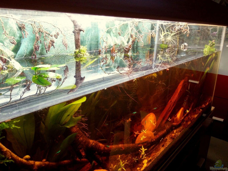 aquarium von wid mein erstes schwarzwasserbecken. Black Bedroom Furniture Sets. Home Design Ideas