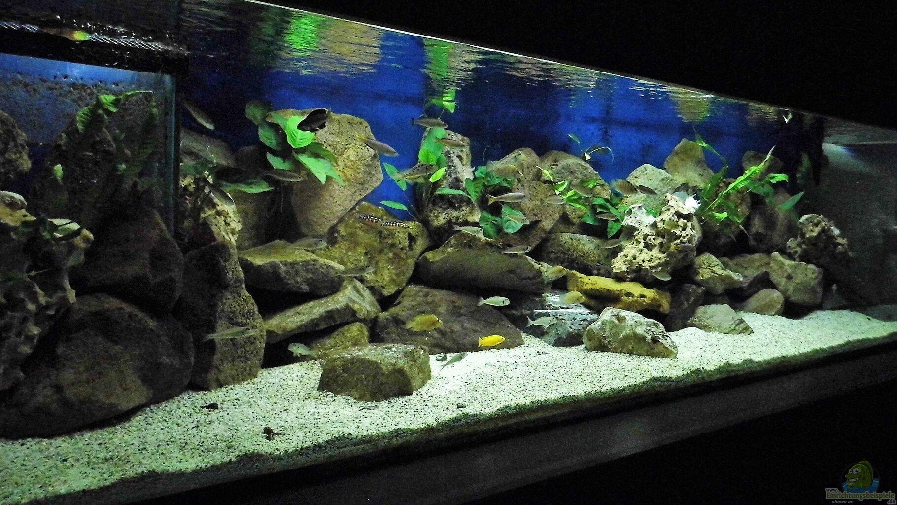 Aquarium von gerald kascha becken 33697 for Aquarium becken