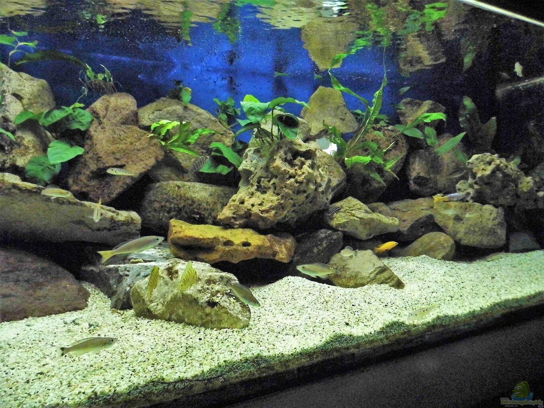 aquarium von gerald kascha becken 33697