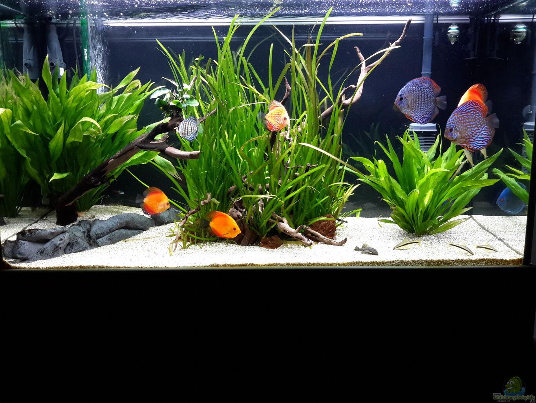 Aquarium von phil cle diskus for Diskus aquarium