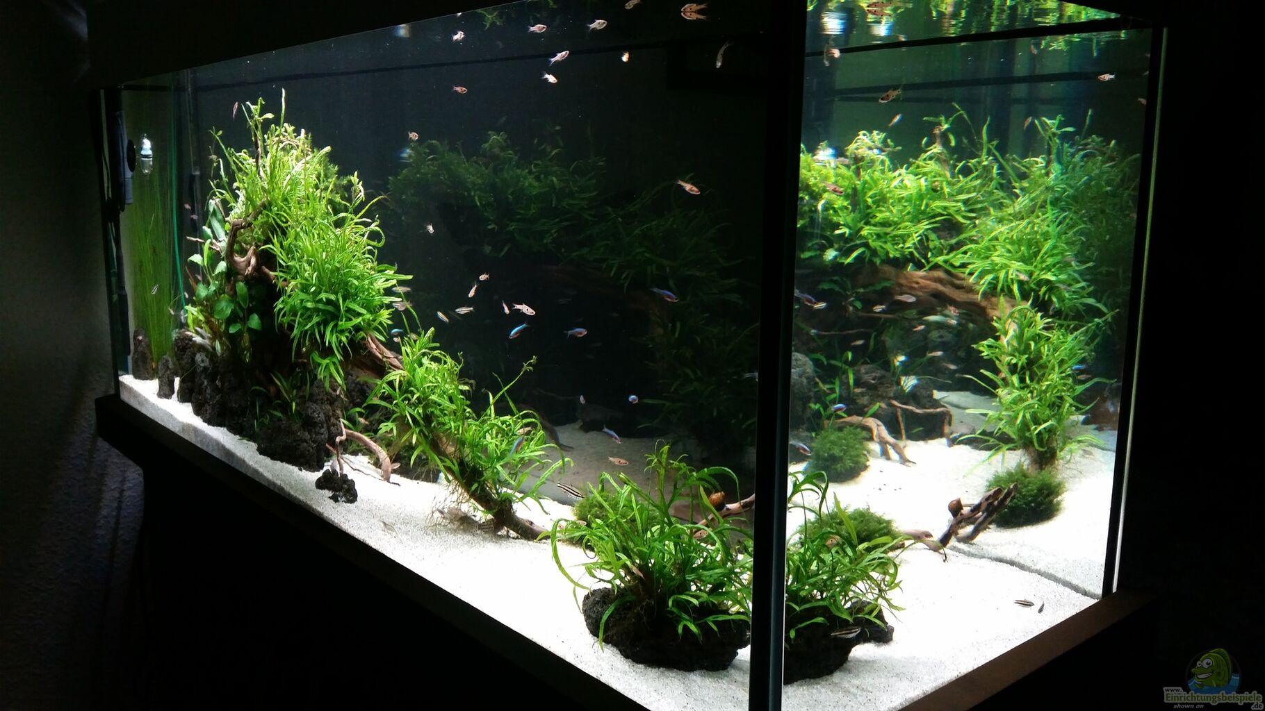 aquarium kleine fische aus kleine fische von panzerwelsfan. Black Bedroom Furniture Sets. Home Design Ideas