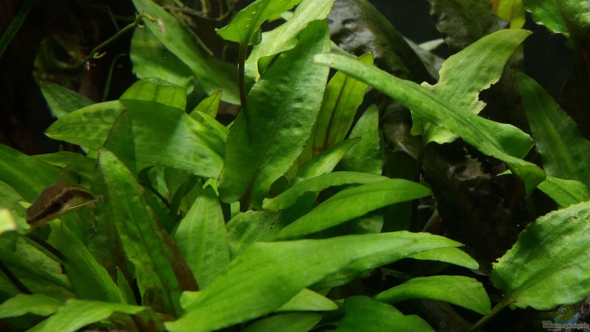 pflanzen im aquarium kleine fische aus kleine fische von. Black Bedroom Furniture Sets. Home Design Ideas