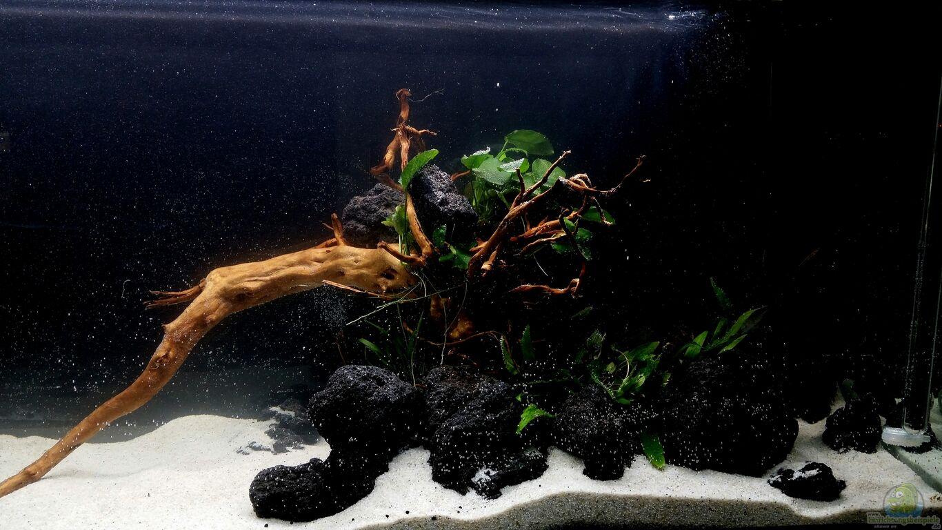 Aquarium von panzerwelsfan kleine fische for Kleine fische