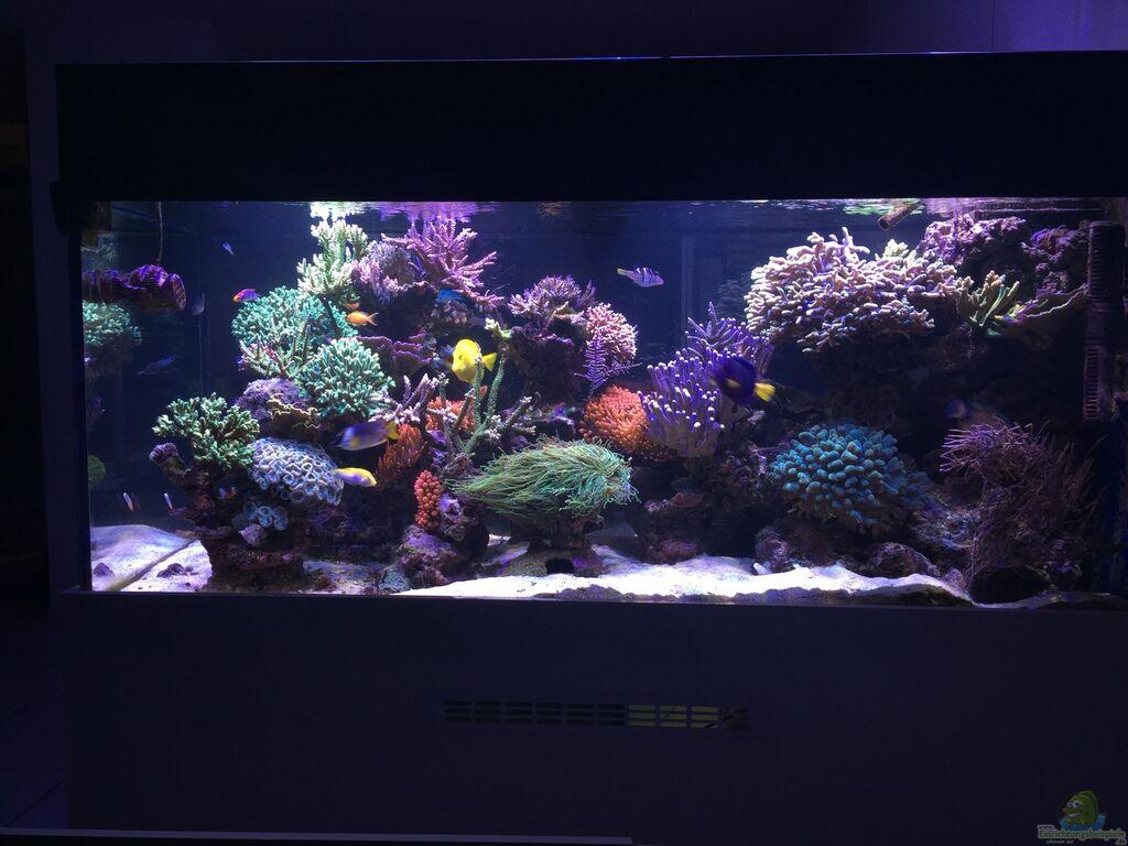 Aquarium von joachim dierl becken 33714 for Aquarium becken