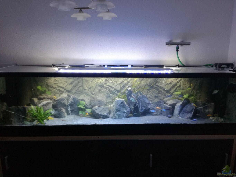 Aquarium von andreas rieger becken 33718 for Aquarium becken