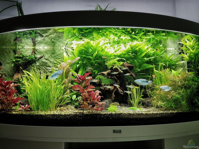 Aquarium von h4rdei becken 33720 for Aquarium becken
