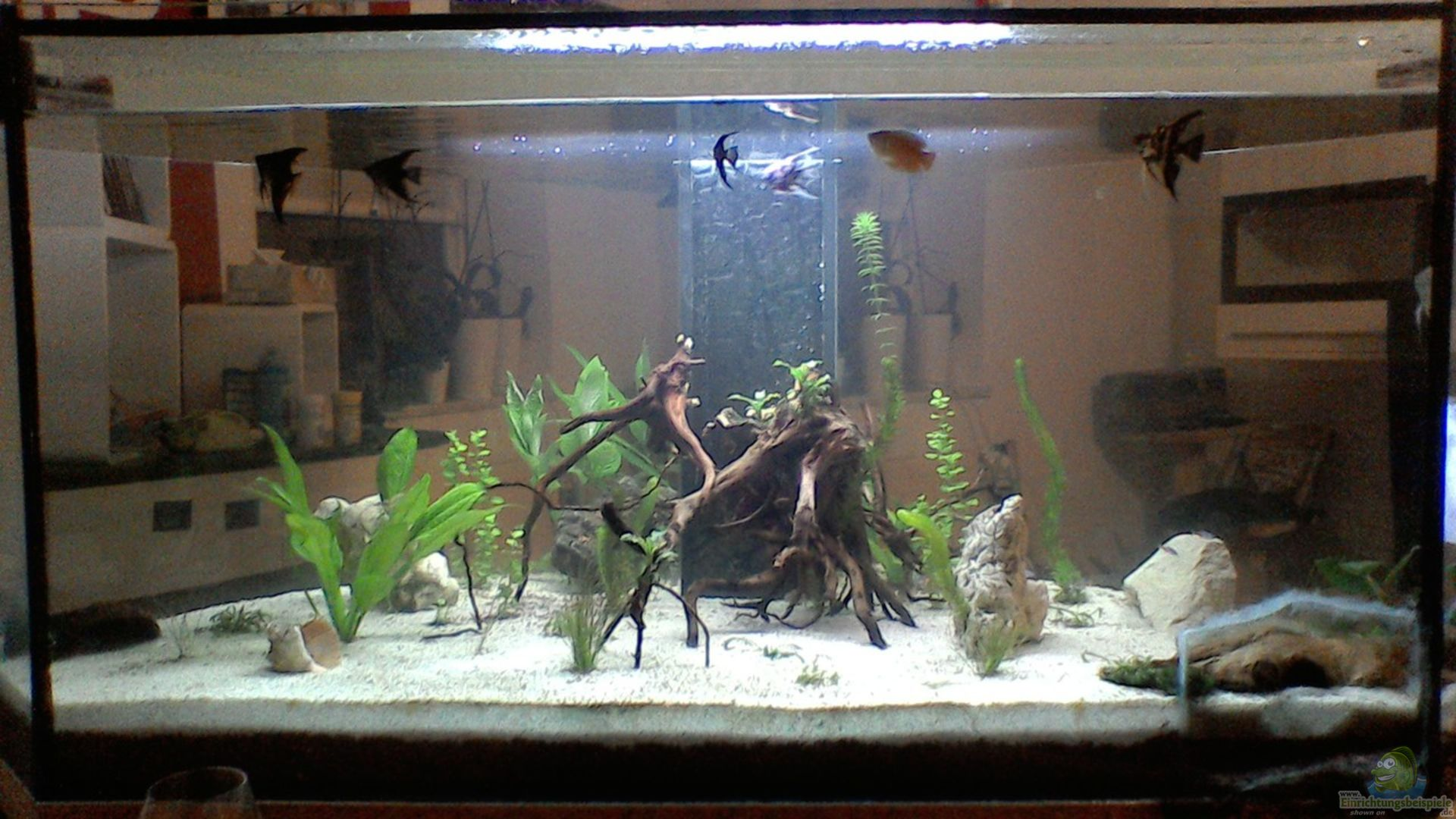 frettchen87 33734 mein kleines unterwasserparadies. Black Bedroom Furniture Sets. Home Design Ideas