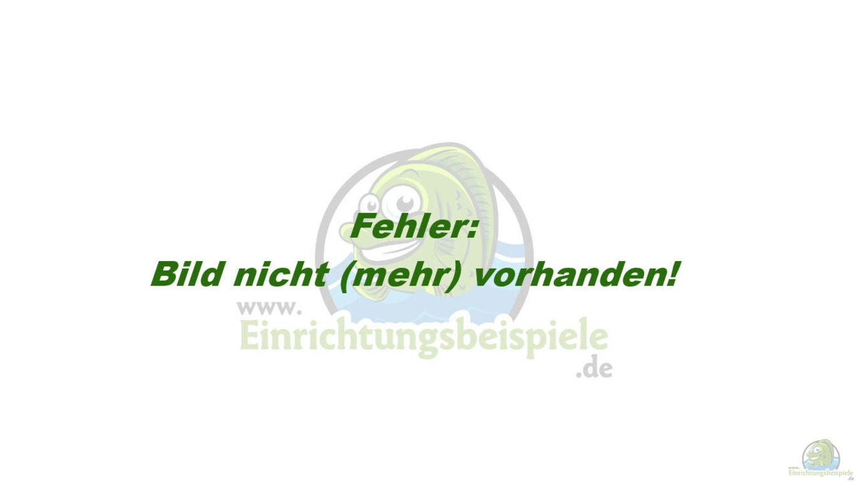 deutsche hahnrei fick