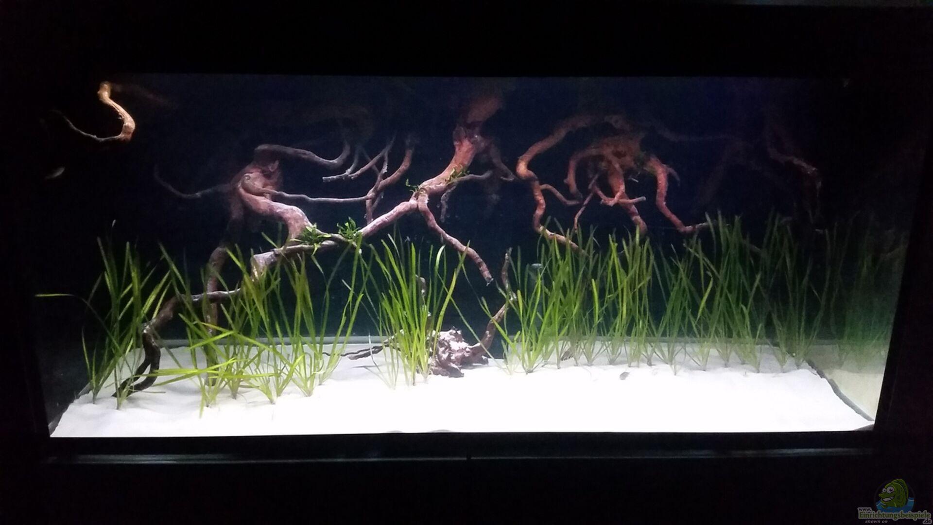 aquarium von phillip92 33753 incpiria 400 diskus. Black Bedroom Furniture Sets. Home Design Ideas