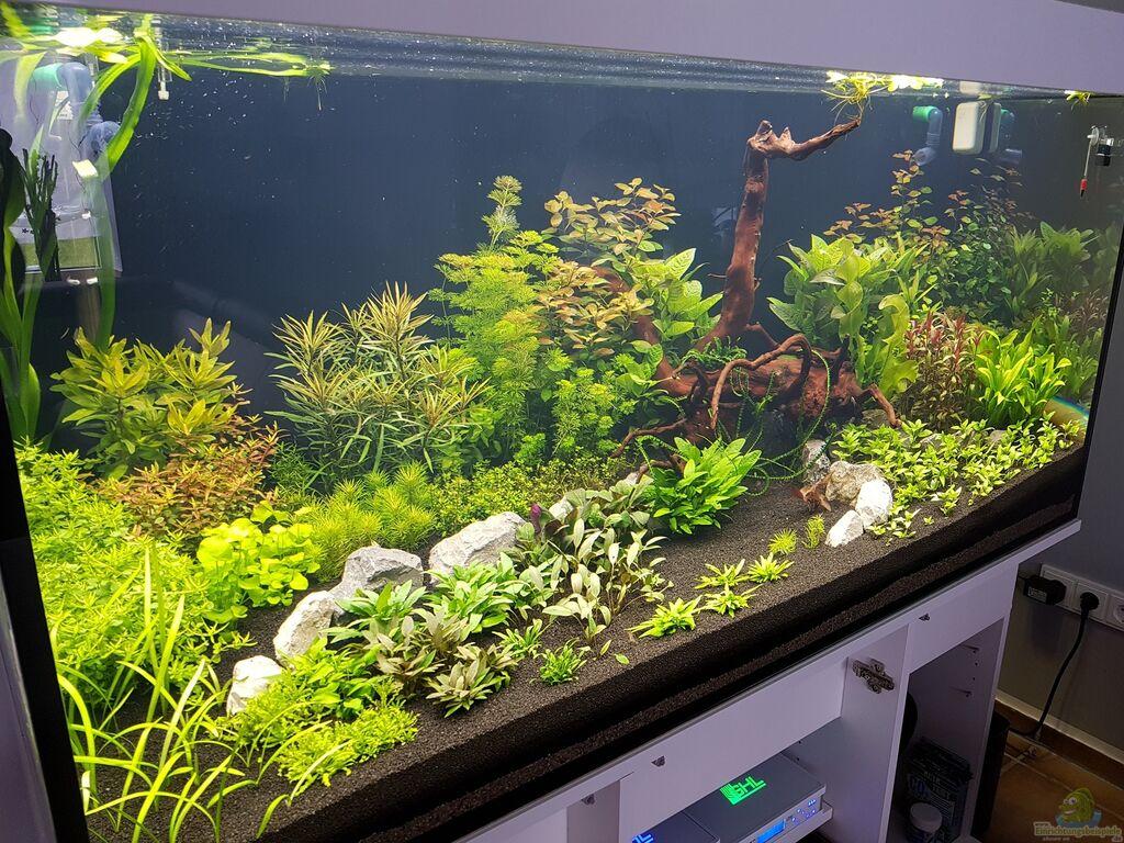 mein traum becken aus pflanzenmaster von pflanzenmaster. Black Bedroom Furniture Sets. Home Design Ideas
