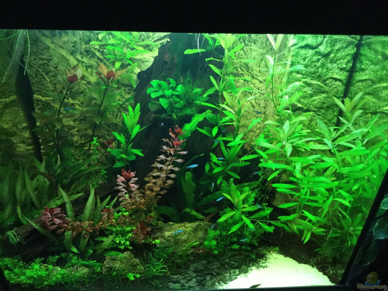 aquarium von tobim02 tobi 39 s s damerika becken. Black Bedroom Furniture Sets. Home Design Ideas