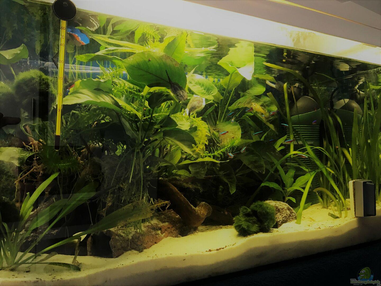 aquarium hauptansicht von kleines gr n becken wird aufgel st aus kleines gr n becken wird. Black Bedroom Furniture Sets. Home Design Ideas