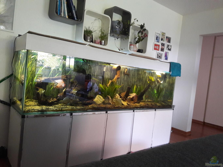 aquarium von kevin fruhen mein traum vom amazonas. Black Bedroom Furniture Sets. Home Design Ideas