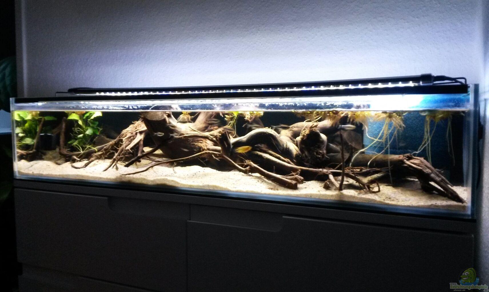 aquarium von berlin42 100cm flussufer mato grosso. Black Bedroom Furniture Sets. Home Design Ideas