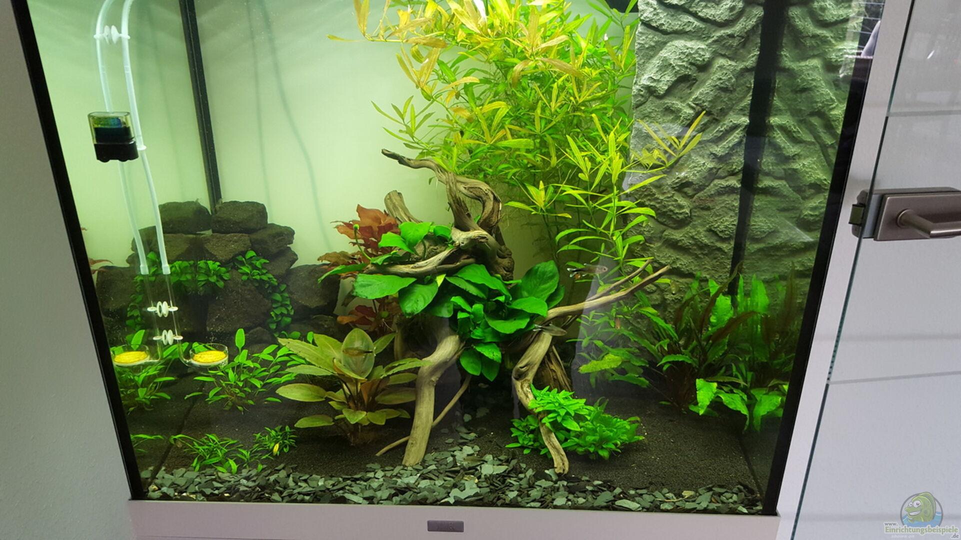 aquarium von oliver peters 33837 unterwasserwelt