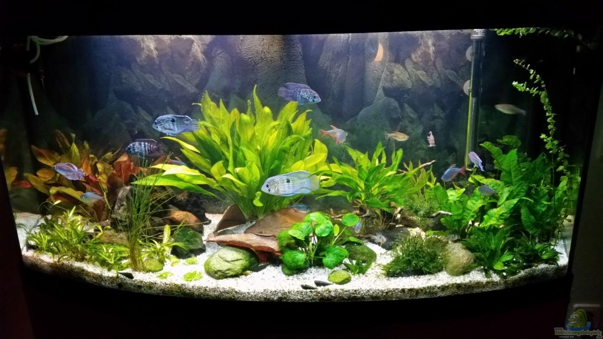aquarium von olebambole 33860 fluval vicenza 260. Black Bedroom Furniture Sets. Home Design Ideas