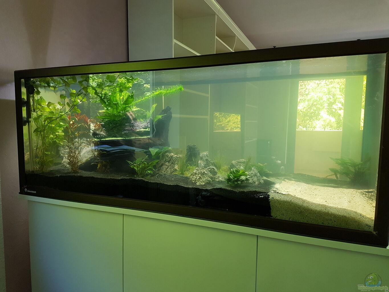 aquarium becken 33864 aus becken 33864 von sunnyboy 72. Black Bedroom Furniture Sets. Home Design Ideas