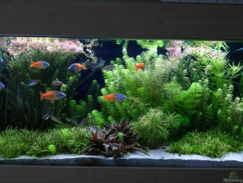 Aquarium von thomas brandt becken 33872 for Aquarium becken