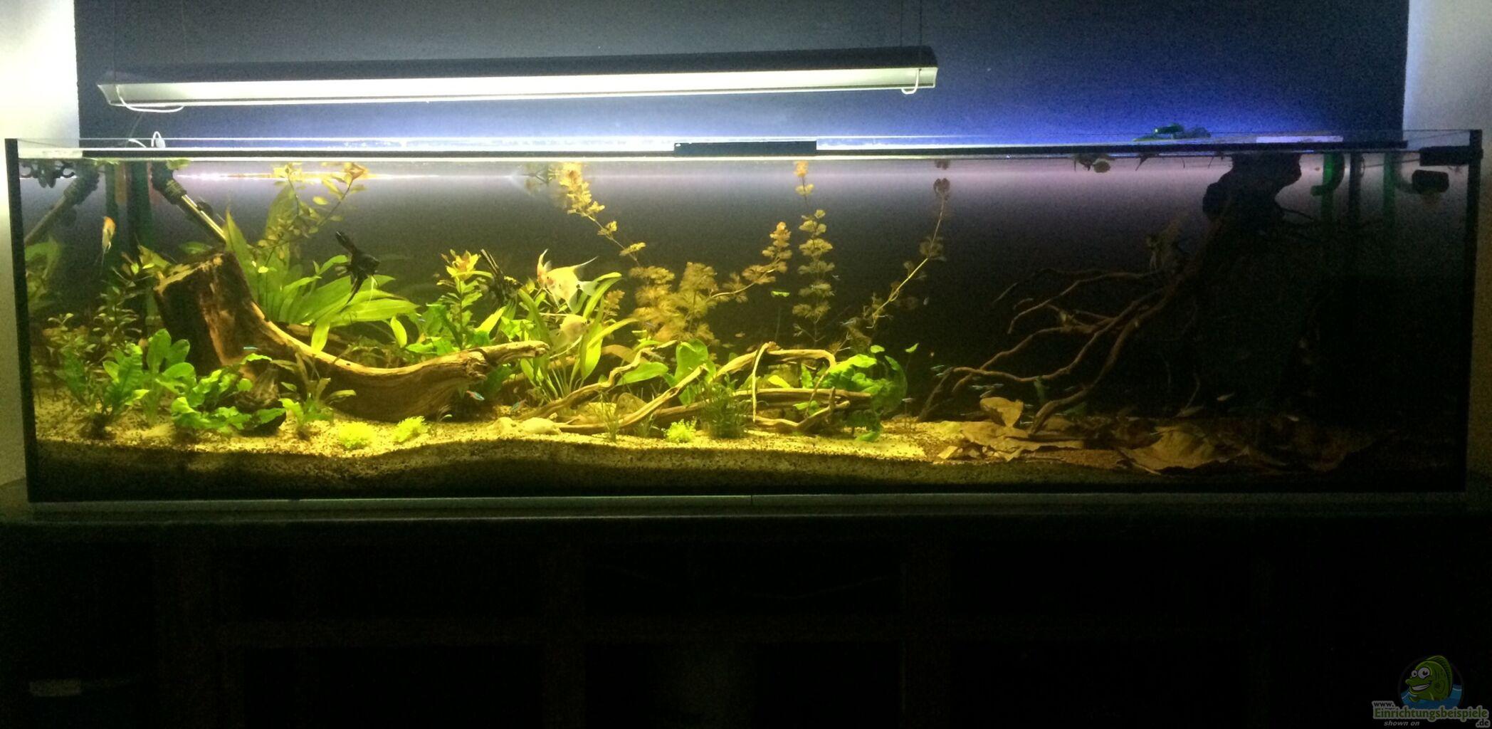 Aquarium von ragner s damerika 500l for Aquarium einrichtungsideen