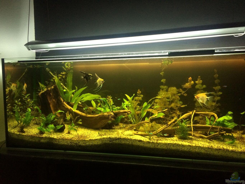 aquarium von ragner s damerika 500l. Black Bedroom Furniture Sets. Home Design Ideas
