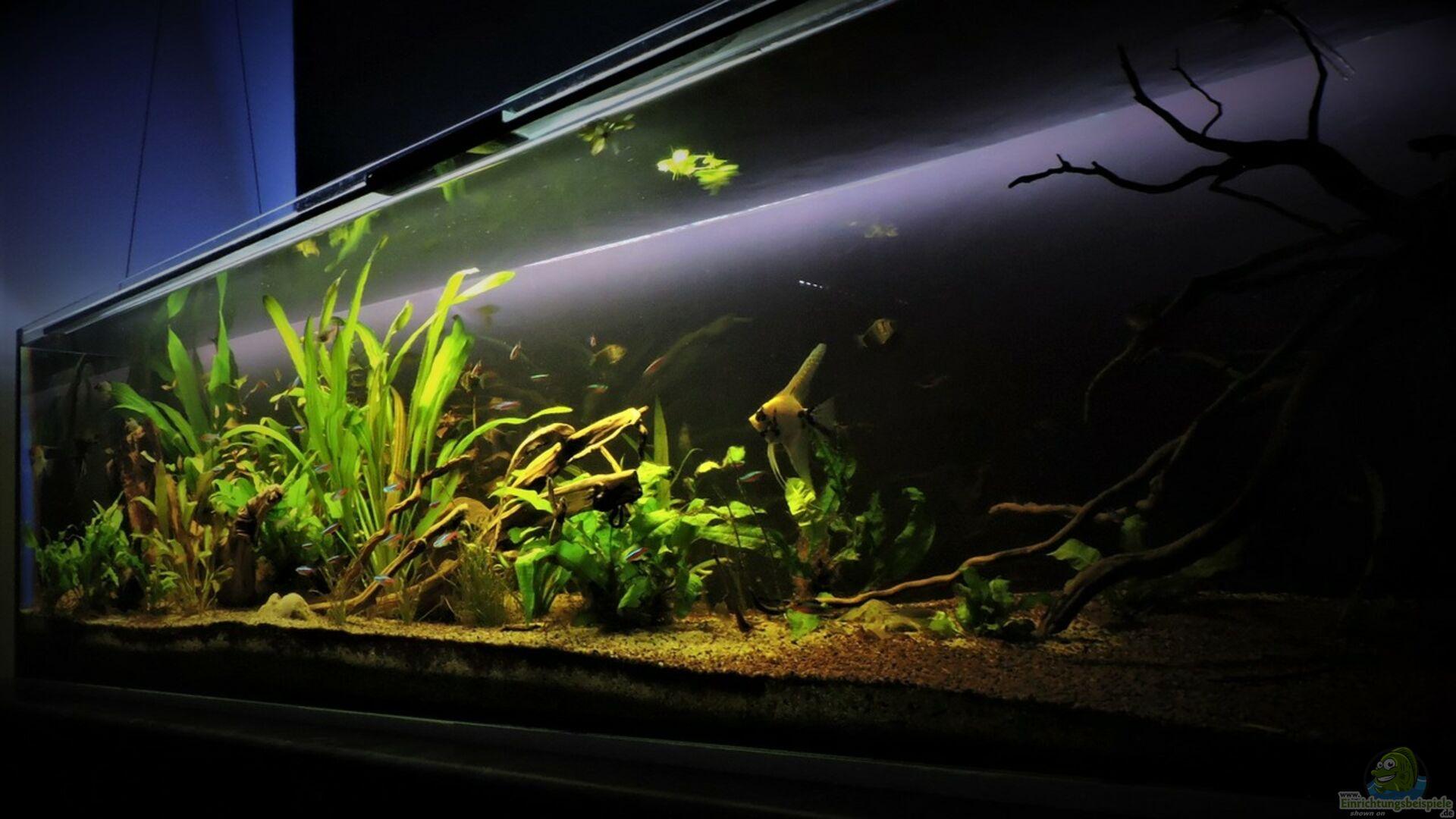 aquarium hauptansicht von s damerika 500l aus s damerika 500l von ragner. Black Bedroom Furniture Sets. Home Design Ideas