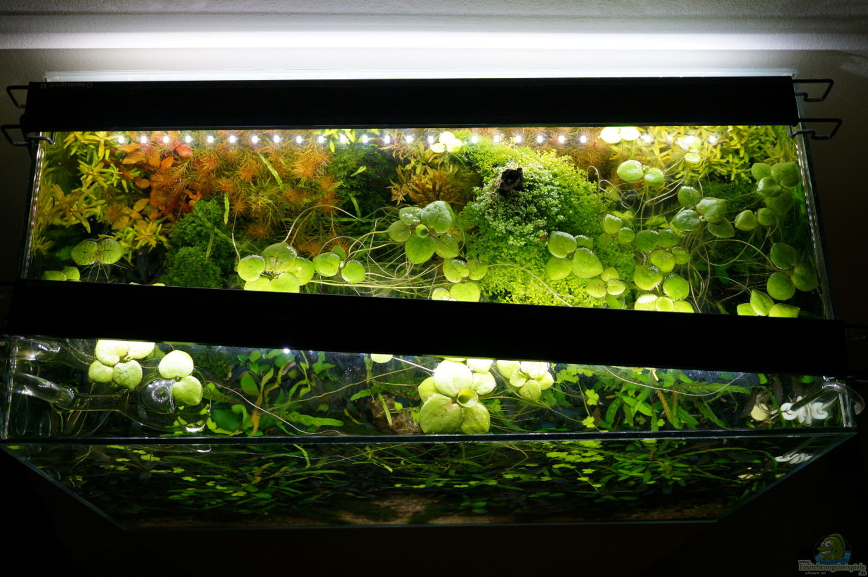 pflanzen im aquarium noch ohne namen aus noch ohne namen von micha. Black Bedroom Furniture Sets. Home Design Ideas