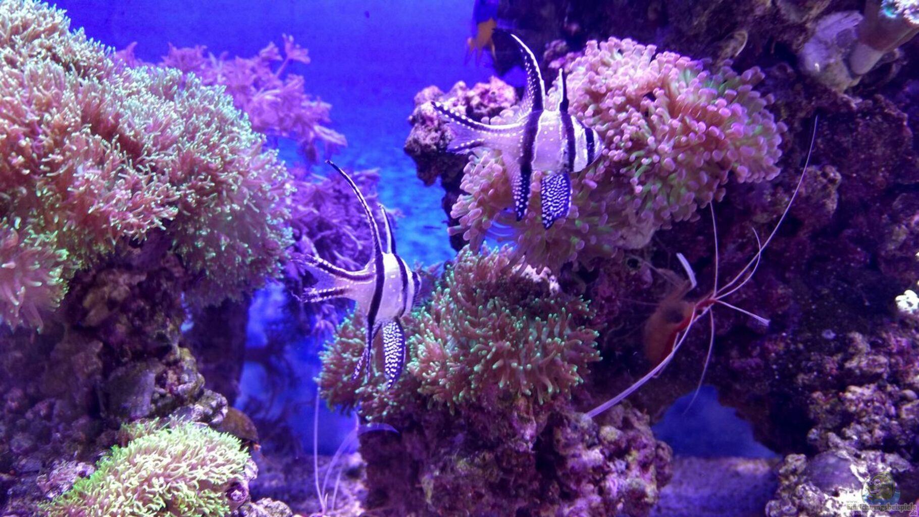 aquarium von micha73 juwel lido 120 meerwasser umabau. Black Bedroom Furniture Sets. Home Design Ideas