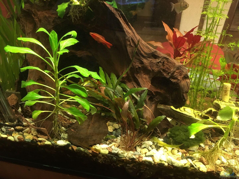 pflanzen im aquarium becken 33922 ceylons raumteiler aus becken 33922 ceylons raumteiler von ceylon. Black Bedroom Furniture Sets. Home Design Ideas